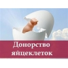 Выплата до 540 000 грн Сурогатным мамам и донорам яйцеклеток