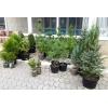 Озеленение территории.  Частный питомник растений в Краснодарском крае