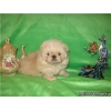 Пекинесы щенки милашки очаровашки