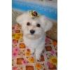 Салон для собак «Лохматики» в Зеленограде