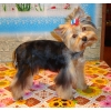 Стрижка собак в Зеленограде для  Митино,  Строгино,  Тушино,  Щукино