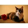 В дар – кошка-трехцветка Роксана!