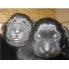 Резервирование щенков лабрадор ретривера!  от родителей- Чемпионов