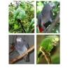 Элитные попугаи а Таганроге
