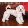 Стрижка собак,  продажа собак,  мальтийская болонка,  йоркширский терь
