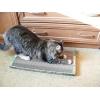 Зоотовары   Когтеточка-лежанка  для кошек