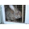 Кролики порода Ризен и Серый великан.  Минифермы производство.