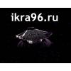Черная Икра опт и розница,  доставка по всей России