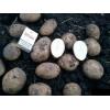 Продается картофель оптом 9 руб/кг