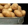 Уральская Агропромышленная Компания «ПЕТРА» занимается продажей свежих