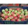 Яблоки продает польская фирма